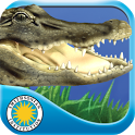 Alligator at Saw Grass Road - Android version